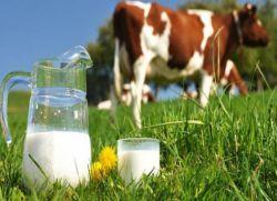 коров`яче молоко користь і шкода