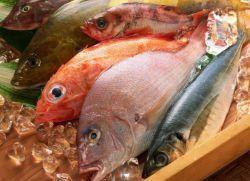 масляна риба користь і шкода