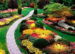 Багаторічні декоративні рослини
