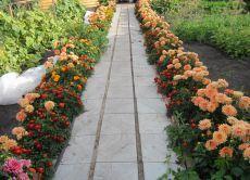 Багаторічні низькорослі квіти
