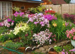 невибагливі багаторічники цвітуть все літо