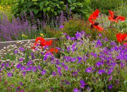 невибагливі довгоквітучі квіти багаторічники для саду