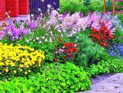 Низькорослі багаторічники, квітучі все літо