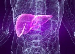 роль печінки в обміні речовин