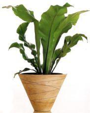 тіньолюбиві кімнатні рослини