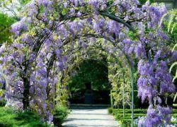 Кучеряві квітучі рослини для саду