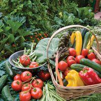 Змова сибірської цілительки для врожаю на городі
