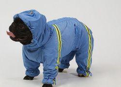 Зимові комбінезони для собак