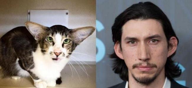 «Зоряні війни» і зоряний кіт крокують просторами інтернету